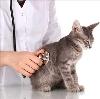 Ветеринарные клиники в Яранске